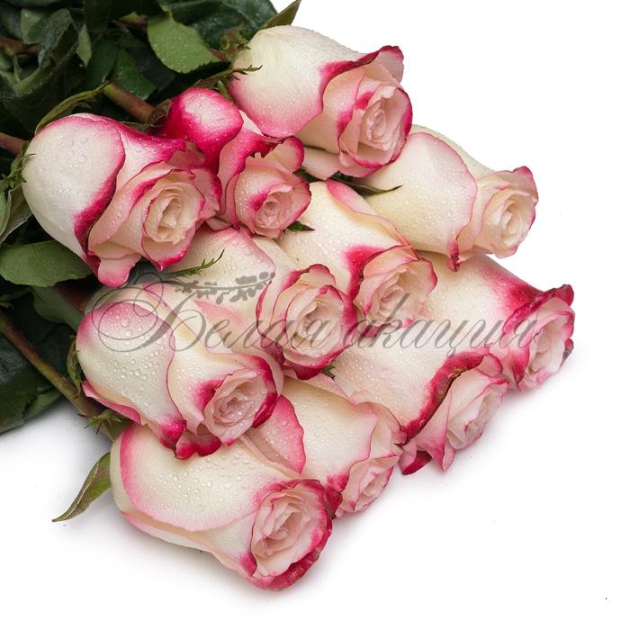 Белая роза и красная роза
