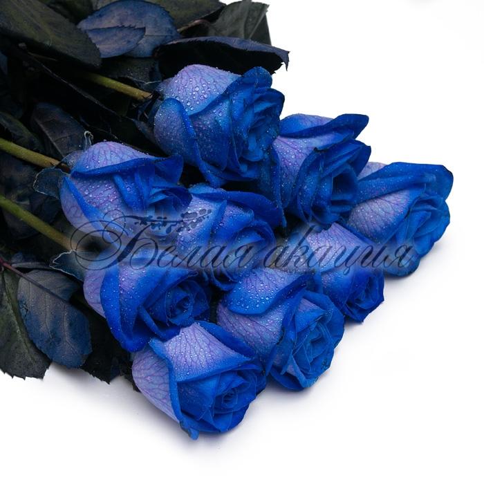 Где купить синие розы новосибирск подарок маме на юбилей своими руками от дочки 8 лет